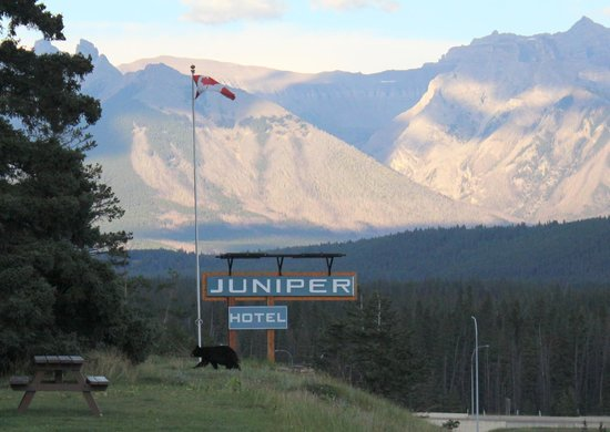 The Juniper Hotel: Lunchtime visitor At Juniper Hotel