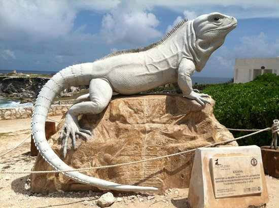 Ixchel Beach Hotel: Ode to the Iguana