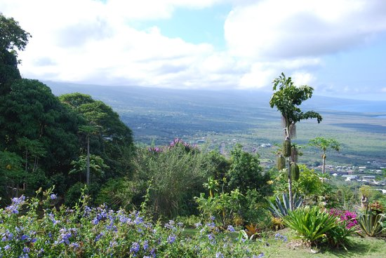 Ka'awa Loa Plantation: view