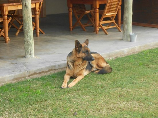 Addo, Afrika Selatan: Jack the freindly German Shepard