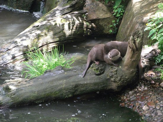 Trinity, UK: otters playing