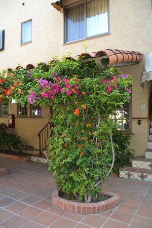 El Cordova Hotel: Beautiful flowers