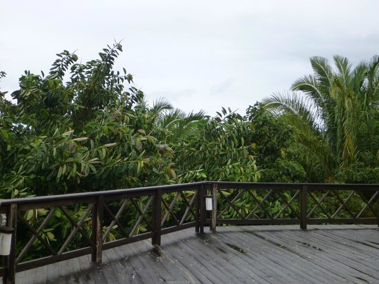 Roatan Bed & Breakfast Apartments: view from the top of BnB
