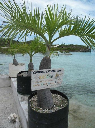 Out Islands: Compass Cay, Bahamas