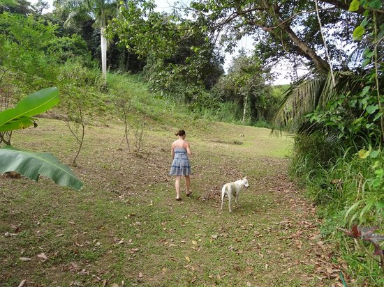 Ceiba, Puerto Rico: walking the grounds with one of the dogs