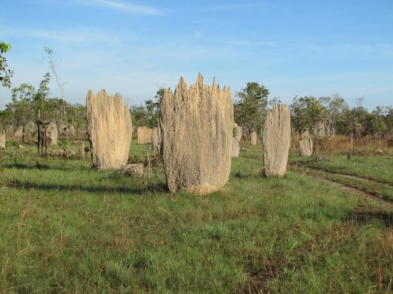 Magnetic Termite Mounds Picture Of Wayoutback Australian