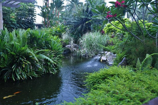 Shangri-La's Rasa Sentosa Resort & Spa, Singapore: The pond
