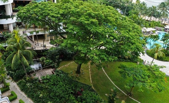 Shangri-La's Rasa Sentosa Resort & Spa, Singapore: Tree on the hotel grounds