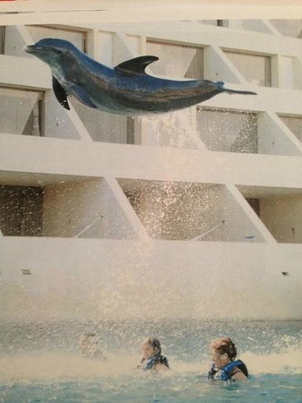 Dreams Cancun Resort & Spa: Dolphin swim