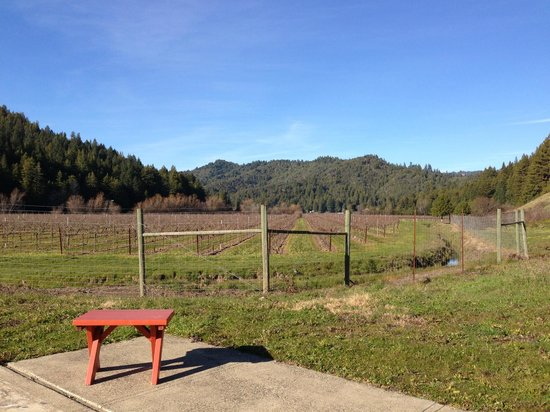 Guerneville, Californie : View from the picnic table area
