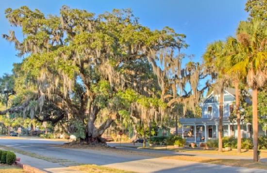 Golden Isles of Georgia, GA: The Lover's Oak (said to date back to the 12th century) is located at the intersection of Albany