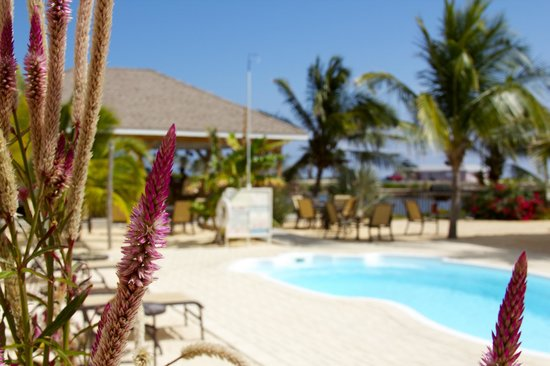 The Alexander Hotel: Flowers and Coconut Trees around the pool