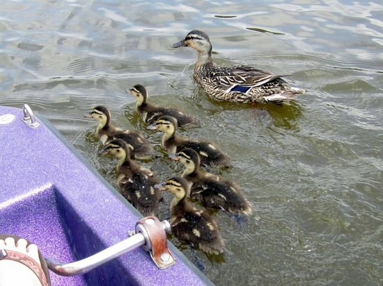 Salisbury, Kuzey Carolina: We had a few visitors while we were paddling around the lake