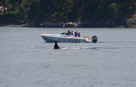 San Juan Islands, WA: Whale Research Team