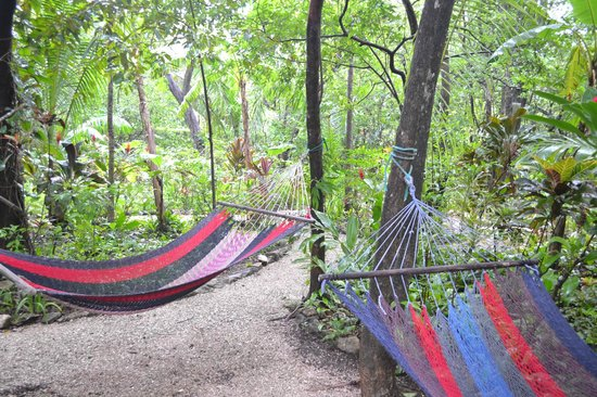 Harbor Reef Surf Resort: Relaxing hammocks in the hotel's jungle like setting.