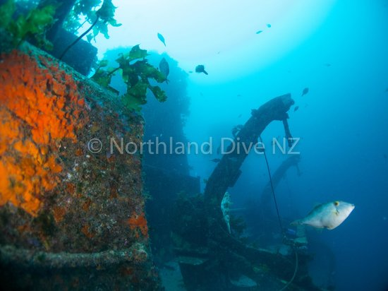 Northland Region, New Zealand: Canterbury Wreck