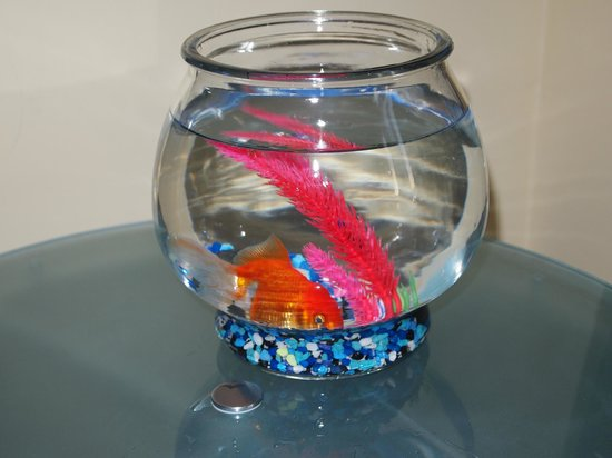 Nine Zero Hotel - a Kimpton Hotel: Our pet goldfish!
