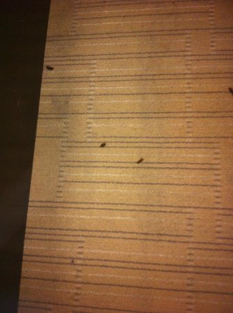 Hard Rock Hotel & Casino Biloxi: Second room with more cigarette burns and the carpeting looks dirty