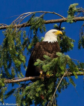 April Point Resort & Spa: Eagle above our room