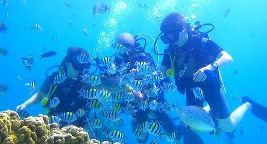 Infinity Ocean Diving Phuket Location Map,Location Map of Infinity Ocean Diving Phuket,Infinity Ocean Diving Phuket accommodation destinations attractions hotels resorts map reviews photos pictures