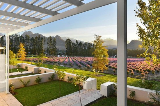 Photo of Lavender Farm Guest House Franschhoek