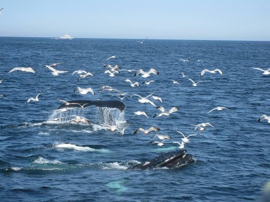 Old Manse Inn: Whale watching !