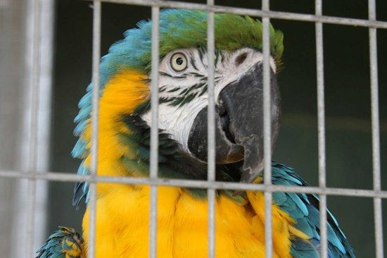Lincolnshire, UK: Blue and Gold Macaw