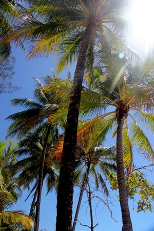 Kewarra Beach, Australia: beautiful palms
