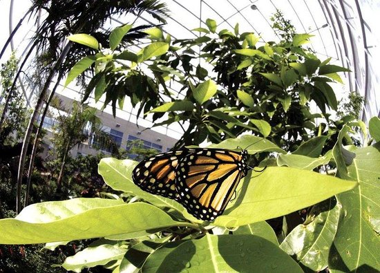 Hilton Garden Inn Gainesville: Butterfly Rainforest