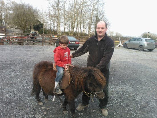 Ennis, Irlanda: pony ride