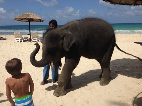 Le Meridien Phuket Beach Resort: dont miss the baby elephant
