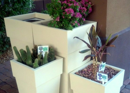 Holiday Inn Express Phoenix Airport (University Drive): native plants