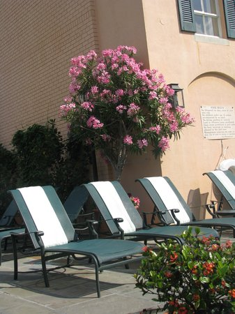 Hotel Monteleone: The pool area