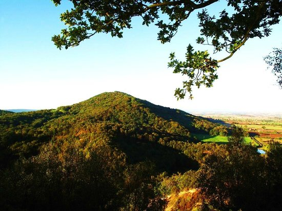 Buckatree Hall Hotel: It is worth climbing the Ercall opposite the hotel for this lovely view of the Wrekin.