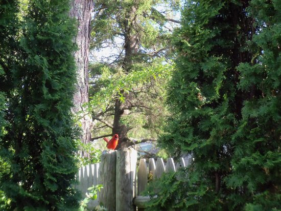 Allen Harbor Breeze Inn & Gardens: one of the Inn's resident cardinals