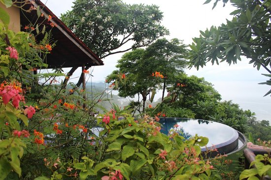 Anamaya Resort & Retreat Center: Jungle, pool, and yoga deck