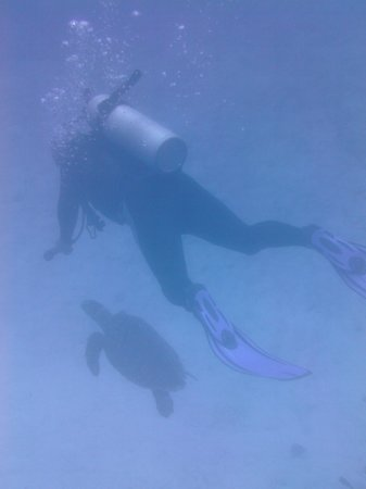 Caye Caulker, Belize: Turtle!