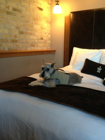Iron Horse Hotel: Our grand dog Jake lounging at the Iron Horse
