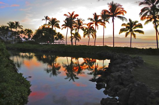 Mauna Lani Bay Hotel & Bungalows: Sunset from the Bungalow area