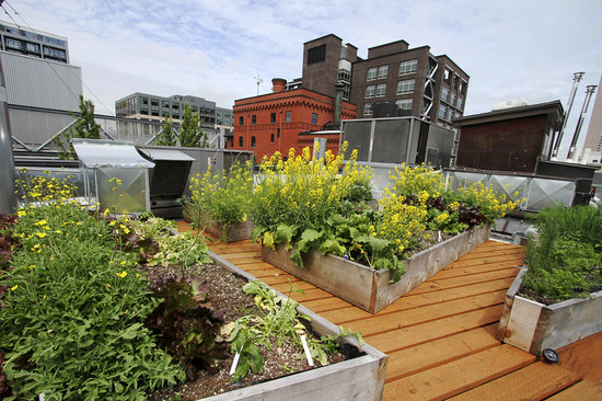 Crystal Hotel: Our rooftop garden that supplys the restaurant