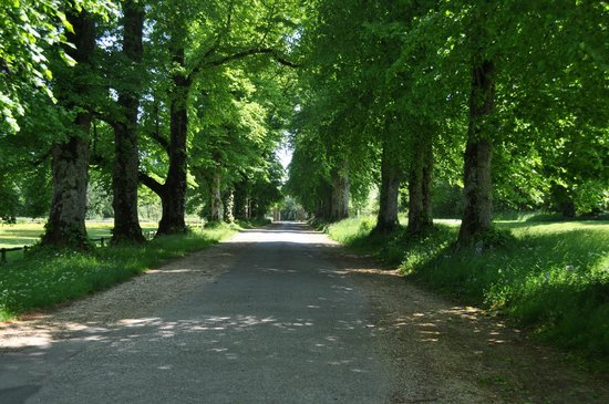 Somerset, UK: Lime Avenue