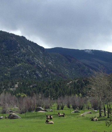 Stonebrook Resort : Rocky Mountain National Park