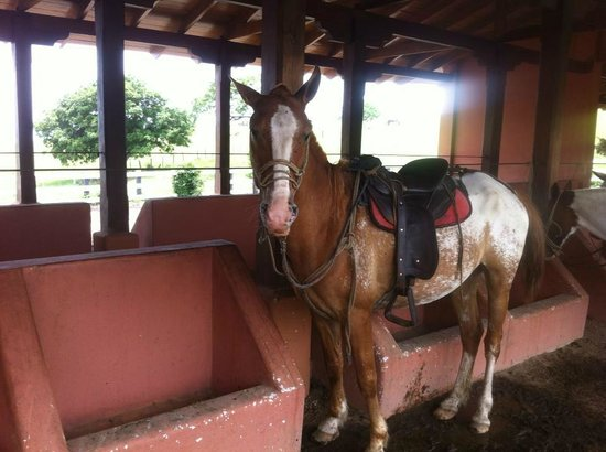Hotel Borinquen Mountain Resort: Horseback ride