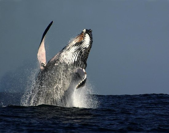 Oz Whale Watching