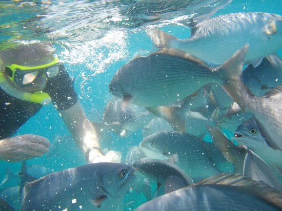 Turneffe Islands, Belize: Lots of fish