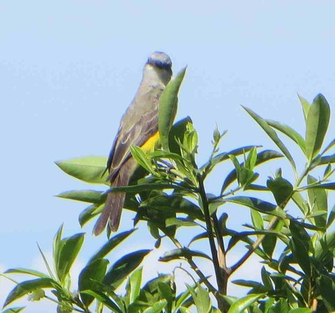 San Ramon, Costa Rica: One of the gorgeous birds easily seen
