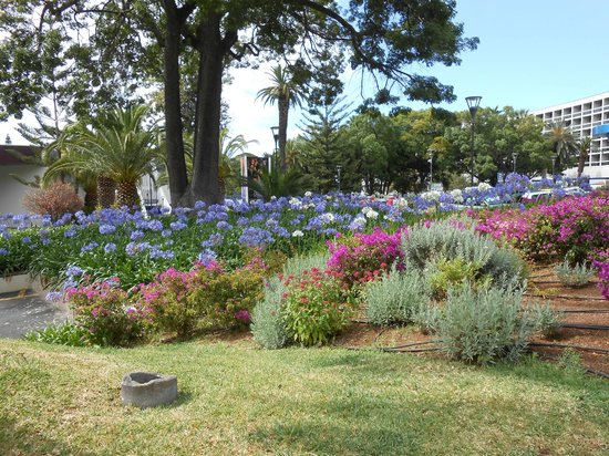 The Cliff Bay (Porto Bay): Funchal flowers