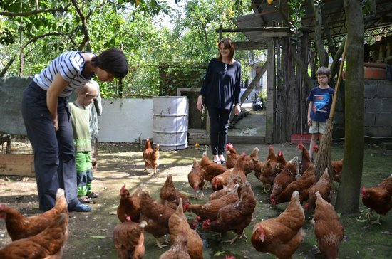 Villa Oriana Relais : The neighbor farm with the hens we were allowed to visit