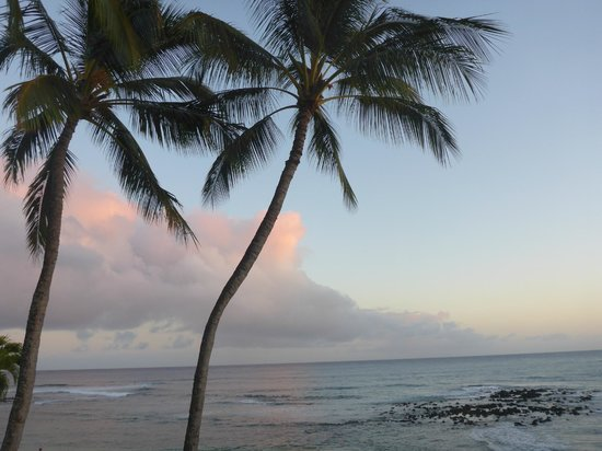 Castle Kiahuna Plantation & Beach Bungalows: Many palms scattered around property