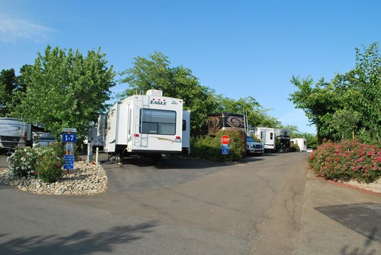 Auburn Gold Country RV Park: More pull-though spaces